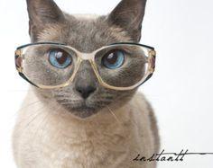Photographic Print - Cat in Glasses - 5x7