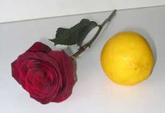Rose and Lemon