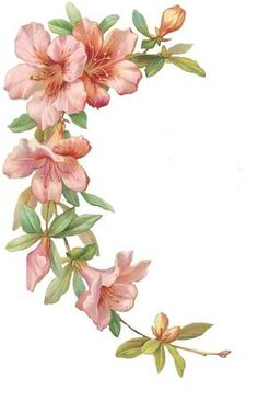 Flower Drawing Pink Hibiscus Stationary and Journal Cards: Art Floral, Flower Prints, Flower Art, Watercolor Flowers, Watercolor Art, Plant Drawing, Vintage Diy, Journal Cards, Fabric Painting