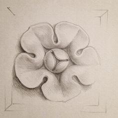 Sketch of rosette A, for inclusion in pediment.