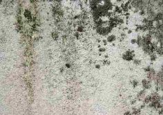 Kill, Clean and Remove Black Mold:  spray a mixture of warm water, Dawn, bleach, scrub....
