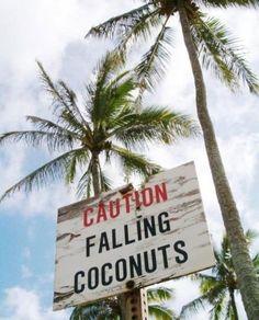 Taking a risk #islandlife #coconut #palmtrees #summervibes #summerstyle #island #summer #hawaii #bahamas #venicebeach #lagunabeach #california #santamonica #miamibeach #melbourne