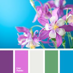 2915 best color palettes and swatches images on pinterest in 2018