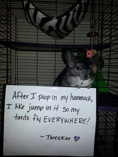 This was like my brother, Andy, and his hamster rat thingy!!!