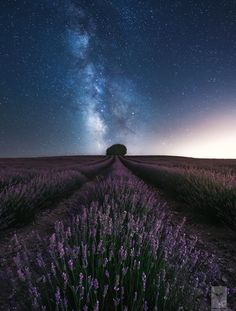 Lavender Night ..... by Luis Vicente on 500px
