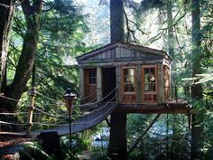 Hide away tree house. Good place to elude the Mob. And the rest of civilization!
