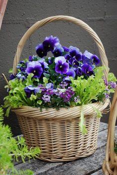 Spring basket ~ container garden Pansies are my favorite Container Plants, Container Gardening, Gardening Zones, Flower Basket, Flower Pots, Decoration Plante, Pot Jardin, Deco Floral, Art Floral