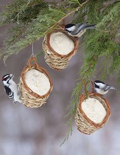 Fill small baskets with suet balls. Roll baskets in peanut butter and coat with bird seed. Hang among the trees.