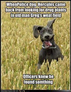 ==> https://helpful-tips.tk/Dog <== funny dog pictures-Drug Dog Tests Positive for Derp #funnydognewyear #funnydogmoments #funnydoggreetingcards #funnydogmats