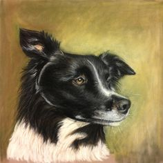 Tinka, the Border Collie