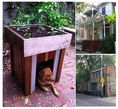 This is just plain awesome. It's a doghouse, made of reclaimed wood scavenged from Dumpsters with a garden on top.