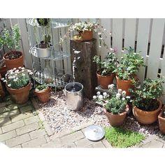 女性で、のDIY立水栓/DIYフェンス/DIY庭/DIY/おはようございます♡/玄関/入り口…などについてのインテリア実例を紹介。「昨日の続き、庭の様子です。リサイクルで出会ったアルミ製の巨大なパーコレーターが水遣りに便利でした。ジョーロと交互に使うと早く済むので♪」(この写真は 2015-04-19 08:18:55 に共有されました)