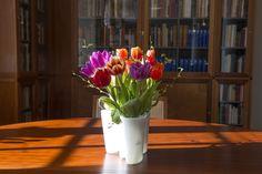 Forår i Biblioteket