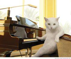cat + piano