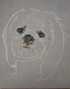 Bonjour à tous ! Aujourd'hui comme promis je vous présente le portrait de Nuts, un adorable Shih-tzu qui est malheureusement décédé. Il... Chien Shih Tzu, Perro Shih Tzu, Shih Tzu Dog, Animal Drawings, Cute Drawings, Dog Paw Drawing, Beginner Art, Malteser, Color Pencil Art