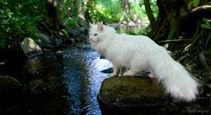 """* * """" Damn! A streams ands dat means water. Me willz haz to takes de long route - mays be leeches in der."""""""