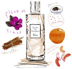 illustration by Lucile Prache. Love the visuals of perfume notes.