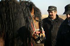 CannonCat - Karolina Falkiewicz art Horse market in Skaryszew Poland