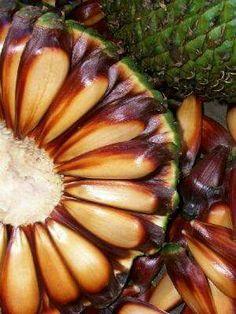 Pinga aberta mostrando pinhão Fruit Jam, Fruit And Veg, Fruits And Vegetables, Exotic Fruit, Tropical Fruits, Brazilian Fruit, Plant Species, Seed Pods, Patterns In Nature