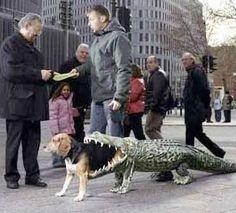 what alligator?