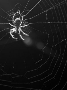 63 Ideas Black And White Nature Photography Spider Webs For 2019 - 63 Ideas . Insect Photography, Animal Photography, Abstract Photography, Spider Art, Spider Webs, Black And White Spider, Sombre, The Villain, Shades Of Black