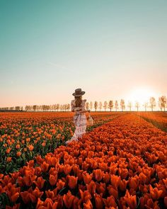 Image may contain: sky, outdoor and nature First Photo, Wander, Tulips, Netherlands, Travel Inspiration, Dolores Park, Journey, Europe, Sky