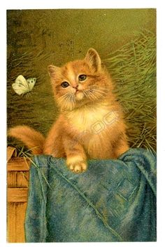 Schwar vintage postcard beautiful ginger cat in barn watches butterfly | eBay