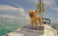 11 Summer Cruises That You Can Take With Your Dog
