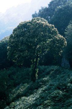 https://flic.kr/p/JCtupv   Monti di Ronco, Ticino, Svizzera