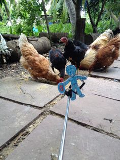We have chicken farm