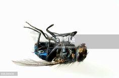 Dead fly. UK. © Georgie Holland / age fotostock - Stock Photos, Videos and Vectors