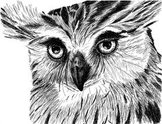 Great Horned Owl Face - Pen and Ink Print, 5x7