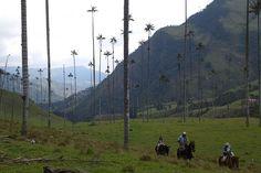 Las palmeras las altas del Mundo [Colombia] Mountains, Nature, Travel, World, Sea Level, Palm Trees, Traveling, Colombia, Scenery