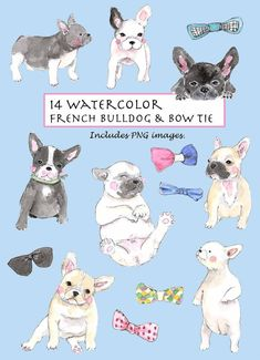 14 elements of hand drawn watercolor French Bulldog & Bow Tie images. This super cute doggy and matched bow tie collection is great for cards,