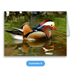 Mandarin Duck All Occasion Greeting Card at: http://www.zazzle.com/mandarin_duck_greeting_cards-137140715471105387?rf=238623693837530845