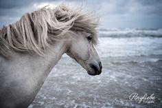 Portfolio - Ponyliebe – Pferdefotografie – Turnierfotografie in Bayern