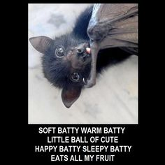 Fruit bats stuffing their faces Funny Animal Memes, Funny Animals, Cute Animals, Animals And Pets, Baby Animals, Goth Memes, Fruit Bat, Cute Bat, Creature Feature