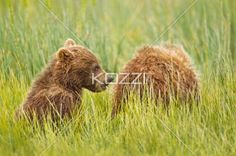 I love these bears from Alaska