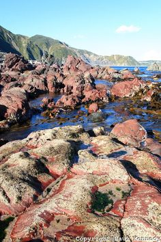 Red Rocks Reserve, South Coast of Wellington, New Zealand Intertidal