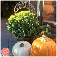 Autumn decorating ideas for front porch with pumpkins and mums | DazzleWhileFrazzled.com