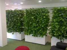 Mobile living wall units for versatile office planting! #office