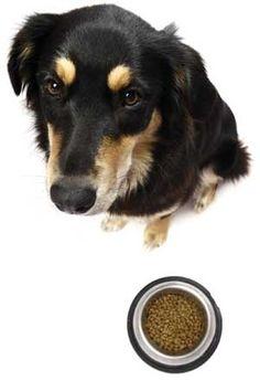 Who Regulates Pet Food? healthy-pets