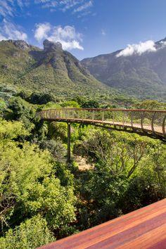 Boomslang Walkway | Kirstenbosch Arboretum Cape Town, South Africa | Mark Thomas and Henry Fagan | photo © Adam Harrower