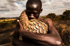 The work of Adrian Steirn engages with humanitarian and wildlife conservation through the 21 Icons Project, Pangolin Man, WWF Africa and Global Fund Animals Beautiful, Beautiful Creatures, Cute Animals, Animals Of The World, Animal Rights, Science Nature, Animal Kingdom, Mammals, Animal Rescue