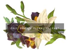 Free vintage floral clipart — Mammasaurus