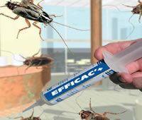 Efficac'+® Produit anti-cafard garanti entre 3 et 5 ans vente uniquement sur www.soscafard.com laboratoire EFFICAC'+® le site officiel