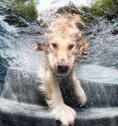 Underwater dogs   Perros bajo el agua