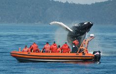 Love to go Whale Watching so upclose! In BC. #Help4theHolidays @LondonDrugs