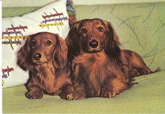 Comfy dachshunds! View from the Birdhouse: Dear Abby: Dachshund Postcards