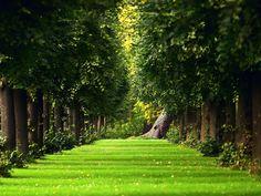 garden wallpaper - Pesquisa Google